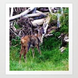 young deer builds a nest Art Print