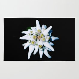 Single isolated Edelweiss flower bloom Rug
