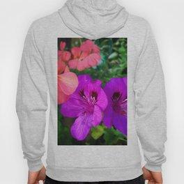 Pink geraniums and purple flowers Hoody