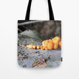Pumpkins on a Log Tote Bag