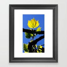 Spring Leaf. Framed Art Print