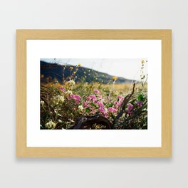 Anza-Borrego Superbloom 1 Framed Art Print