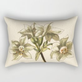 1800s Lithograph Amazon Lily, Eucharis Amazon Grandiflora Flower Rectangular Pillow