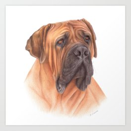 African mastiff colored pencil drawing Art Print