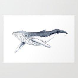 Baby humpback whale (Megaptera novaeangliae) Art Print