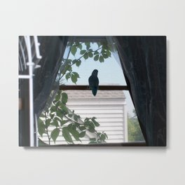 Alone on the Window Sill Metal Print