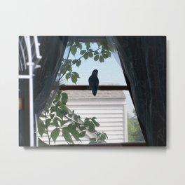 Alone on the Window Sill Metal Print