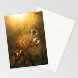 Sunset Leaf Stationery Cards
