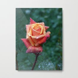 Rainy rose Metal Print