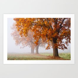 Oaks in the misty Autumn morning (Golden Polish Autumn) Art Print