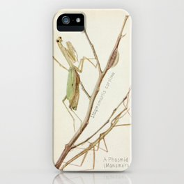Mantid And Stick Insect iPhone Case