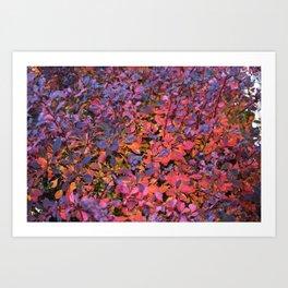 Colorful Fall Leaves Art Print