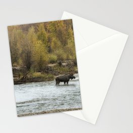 Moose Mid-Stream - Grand Tetons Stationery Cards