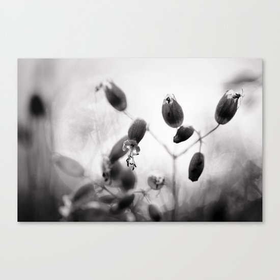 Light shimmers through Canvas Print