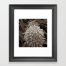 Chocolate Burst Framed Art Print
