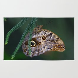 Perfection of a Sleeping Butterfly Rug