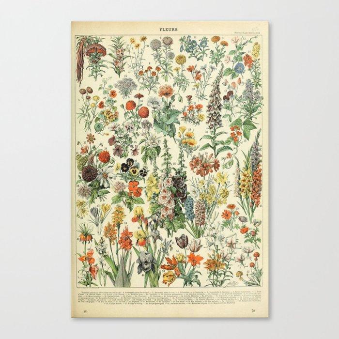 Adolphe Millot Vintage Fleurs Flower 1909 Leinwanddruck