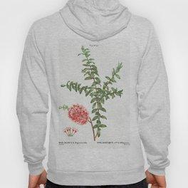 Silver maple Acer saccharinum from Traite des Arbres et Arbustes que lon cultive en France en pleine Hoody