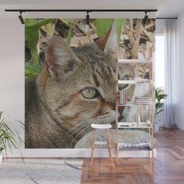 Tabby Cat Portrait Wall Mural