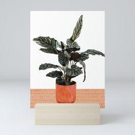 Calathea Planter Mini Art Print