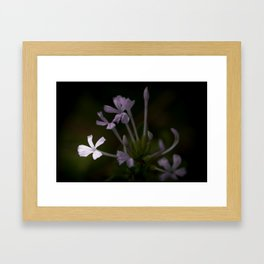 Just Playing Framed Art Print