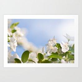 Flowering Cerasus cherry tree Art Print