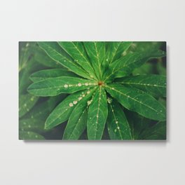 Diamond Leaf Metal Print