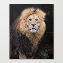 Closeup Portrait of a Male Lion Canvas Print