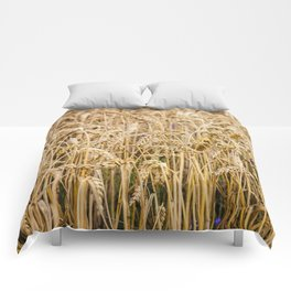 Golden Wheat Comforters
