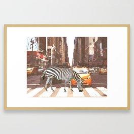 Zebra in New York City Framed Art Print