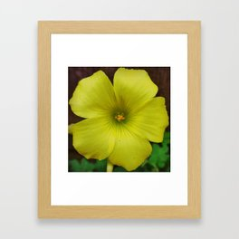 Clover Flower Framed Art Print