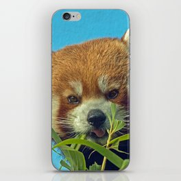 RED PANDA LOVE iPhone Skin