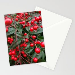 Winter Berries 8x12 Stationery Cards