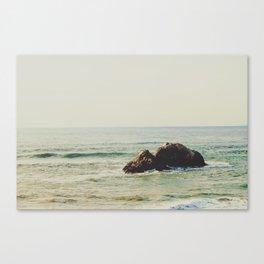 Seal Point Canvas Print