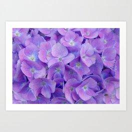 Hydrangea lilac Art Print
