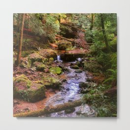 Lovely redwood forest scene at Big Basin State Park. Metal Print