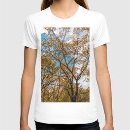 Orange leaves, high trees, clouds in the sky T-shirt