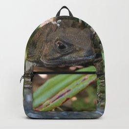 Tuatara : Nw Zealand Endemic Backpack