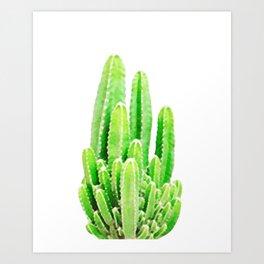 Many Cacti! Art Print