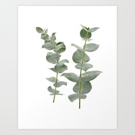 Eucalyptus Branches II Art Print