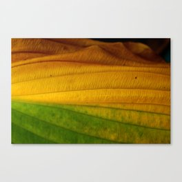 Green to Yellow  Canvas Print