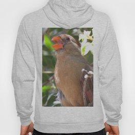 Female Cardinal Hoody