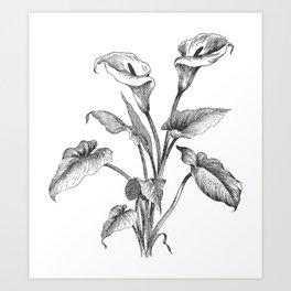 Vintage Calla Lily Bush Art Print