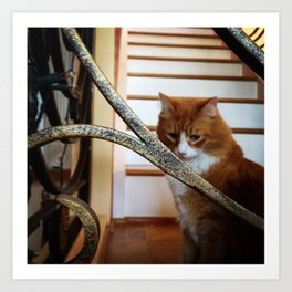 kitty: deep in thought Art Print
