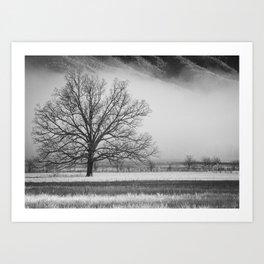 Winter oak in foggy meadow Art Print