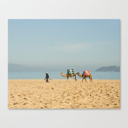 Camels in the Beach in Tangier Morocco Canvas Print
