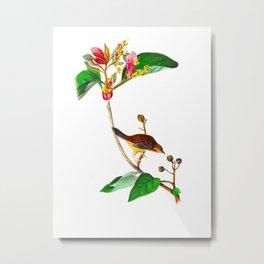 Bachman's Finch James Audubon Vintage Scientific Illustration American Birds Metal Print