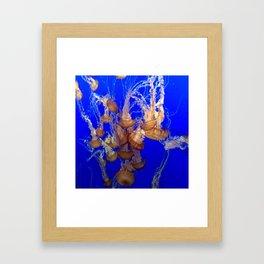 Monterey Bay Jellyfish Framed Art Print