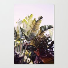 Paradise #1 Canvas Print