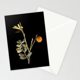 Vintage Mandarin Stationery Cards